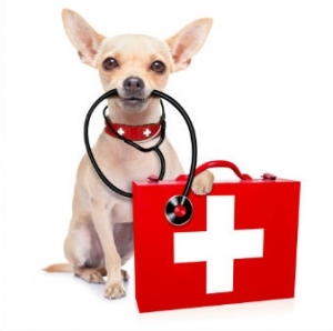 Animal First Aid Course at Community Hubs